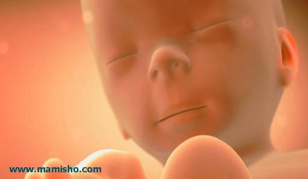 رشد جنین
